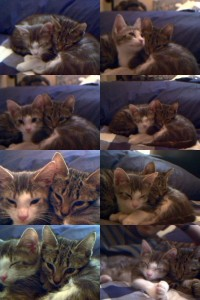 Min and Chet as Kittens